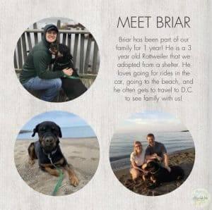 adoption profile book pets